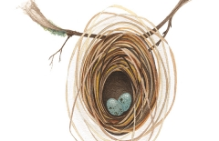 Weaverbird Nest 4