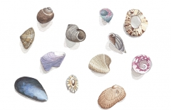 Scattered Shells