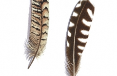 Gull & Pheasant Feather