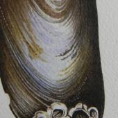 mussel painting